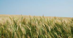Panorama del campo de las cosechas imagenes de archivo