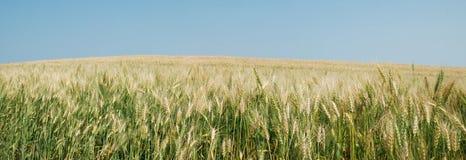 Panorama del campo de las cosechas foto de archivo