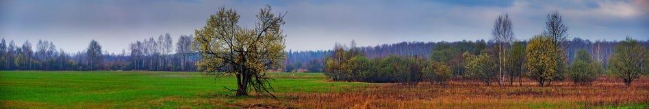 Panorama del campo de Sping Foto de archivo libre de regalías