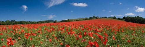 Panorama del campo del papavero Immagine Stock