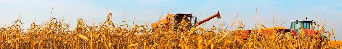 Panorama del campo di grano con l'associazione ed il trattore del raccolto Fotografia Stock Libera da Diritti