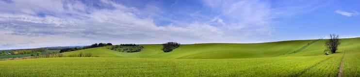 Panorama del campo di grano verde e del cielo blu nuvoloso Immagine Stock Libera da Diritti