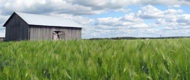 Panorama del campo di Rye Immagine Stock