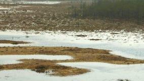 Panorama del campo del pantano en la reserva de Cepkeliai, Lituania metrajes