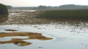 Panorama del campo del pantano en la reserva de Cepkeliai, Lituania almacen de video