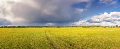 Panorama del campo rurale di estate con i fiori gialli e la strada, Russia Fotografie Stock