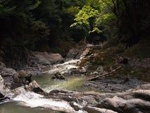 Panorama del canyon con un'insenatura e un muschio Fotografie Stock