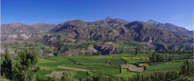 Panorama del canyon di Colca, Perù, Sudamerica Inche per costruire Farmin Immagini Stock