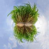 Panorama del cerchio della canna da zucchero Immagine Stock Libera da Diritti