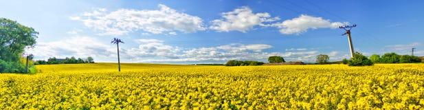 Panorama del colza oleifero Fotografia Stock