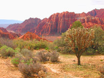 Panorama del deserto fotografie stock libere da diritti