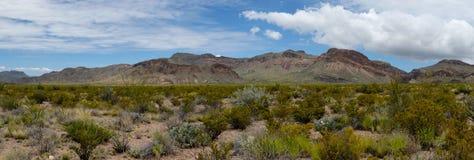 Panorama del deserto di Chihuahuan Fotografie Stock