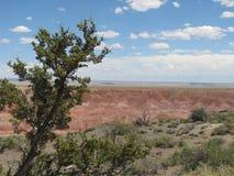 Panorama del deserto dipinto Immagini Stock Libere da Diritti
