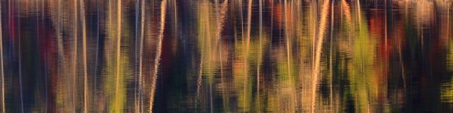 Panorama del extracto del color de la caída Foto de archivo