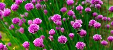 Panorama del fiore fotografie stock