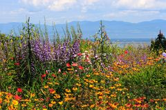 Panorama del fiore vicino alla rotta Fotografia Stock