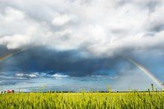 Panorama del giacimento della molla con l'arcobaleno Immagine Stock