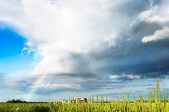 Panorama del giacimento della molla con l'arcobaleno Fotografie Stock Libere da Diritti