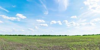 Panorama del giacimento della soia Immagini Stock Libere da Diritti