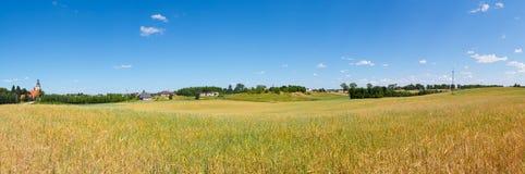 Panorama del giacimento di grano in Lubichowo, Polonia Fotografia Stock Libera da Diritti