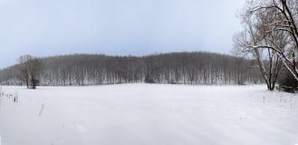 Panorama del invierno Fotografía de archivo libre de regalías
