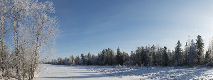 panorama del invierno del paisaje del bosque en el norte de R Fotografía de archivo libre de regalías