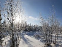 panorama del invierno del paisaje del bosque en el norte de R Imágenes de archivo libres de regalías