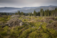 Panorama del Krkonose Mts. Immagine Stock