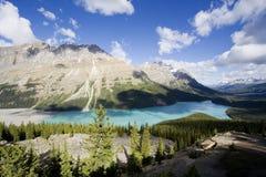 Panorama del lago di peyto Immagini Stock Libere da Diritti