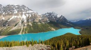 Panorama del lago Peyto Immagine Stock