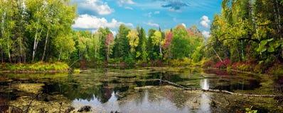 Panorama del legno di autunno Fotografia Stock