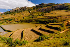 Panorama del Madagascar Fotografia Stock