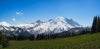 Panorama del monte Rainier sotto cielo blu fotografie stock libere da diritti