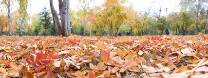 Panorama del otoño Imágenes de archivo libres de regalías