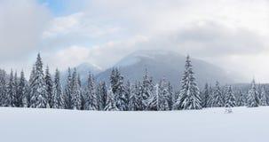 Panorama del paesaggio fantastico di inverno con gli alberi nevosi immagine stock libera da diritti