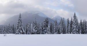 Panorama del paesaggio fantastico di inverno con gli alberi nevosi fotografie stock libere da diritti