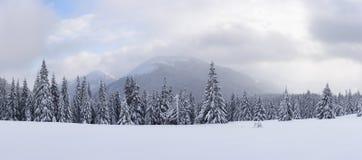 Panorama del paesaggio fantastico di inverno con gli alberi nevosi immagini stock libere da diritti