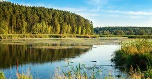 Panorama del paisaje del bosque con el bosque, el río y la costa rocosa, Rusia, Ural, agosto Imagen de archivo libre de regalías