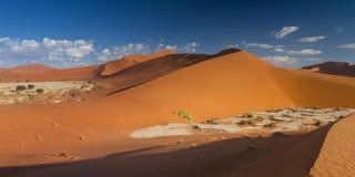 Panorama del paisaje de la duna en Sossusvlei Fotos de archivo libres de regalías