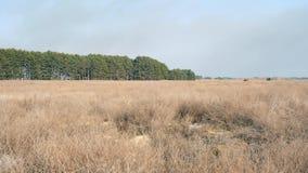 Panorama del paisaje de la estepa y del bosque, Ucrania, región de Kherson metrajes
