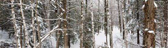 Panorama del paisaje del bosque del invierno Imagen de archivo
