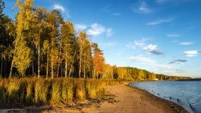 Panorama del paisaje hermoso del otoño con el lago y el bosque en el banco de Rusia, los Urales Imagenes de archivo
