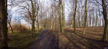 Panorama del parque del otoño Foto de archivo