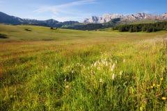 Panorama del prato alpino ad estate Fotografia Stock