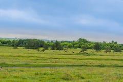 Panorama del prato rurale con il fiume e gli animali della foresta Fotografia Stock Libera da Diritti
