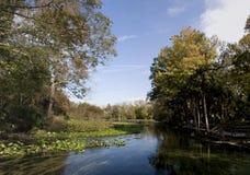 Panorama del resorte natural en la Florida Imágenes de archivo libres de regalías