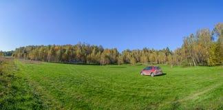 Panorama del soto del abedul en campo del verano Fotografía de archivo libre de regalías