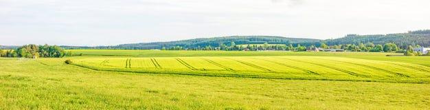 Panorama del terreno coltivabile - giacimento di grano Immagini Stock Libere da Diritti