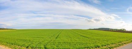 Panorama del terreno coltivabile - giacimento di grano verde Fotografie Stock Libere da Diritti