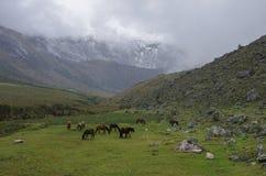 Panorama del valle de la montaña con los caballos cerca de paso de la unión de Punta imagen de archivo libre de regalías